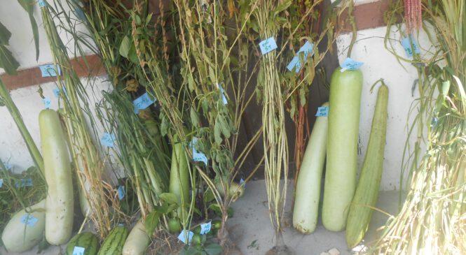 सर्केगाड गाउँपालिका द्धारा दोस्रो कृषि मेला प्रदर्शन